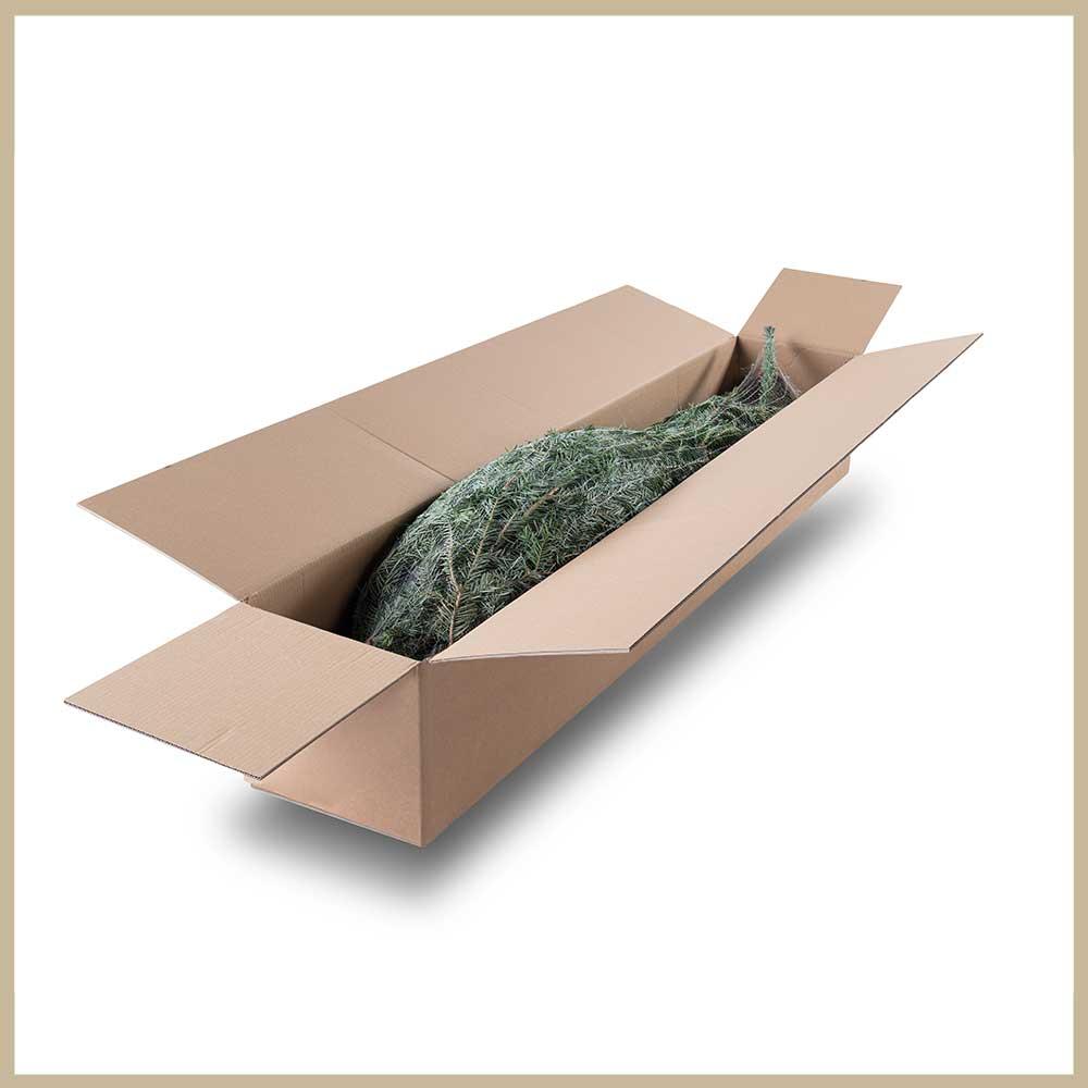 Tannenland-Produktbilder_Breite-Nordmanntanne-Verpackung_einzeln