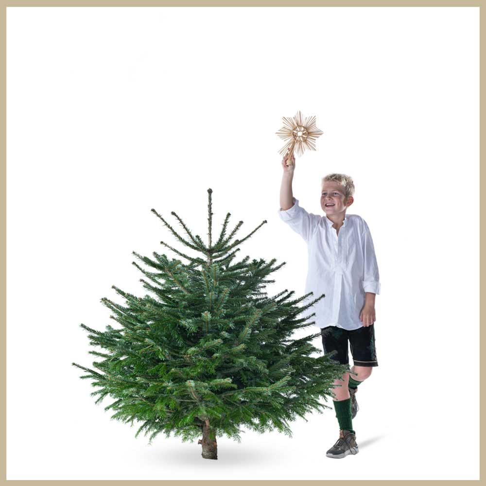 Tannenland-Produktbilder_Breite Tanne_125-150cm_Weihnachtsbaum