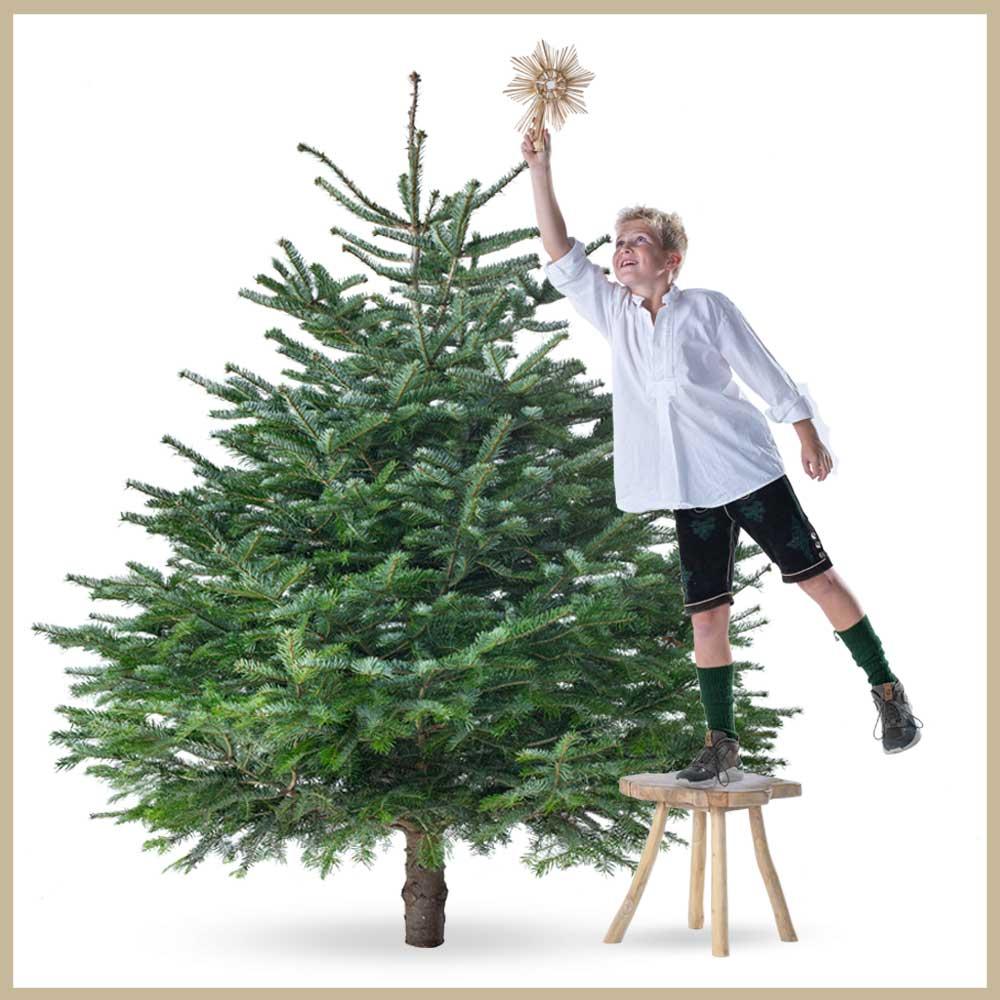 Tannenland-Produktbilder_Breite-Tanne_175-200cm_Weihnachtsbaum